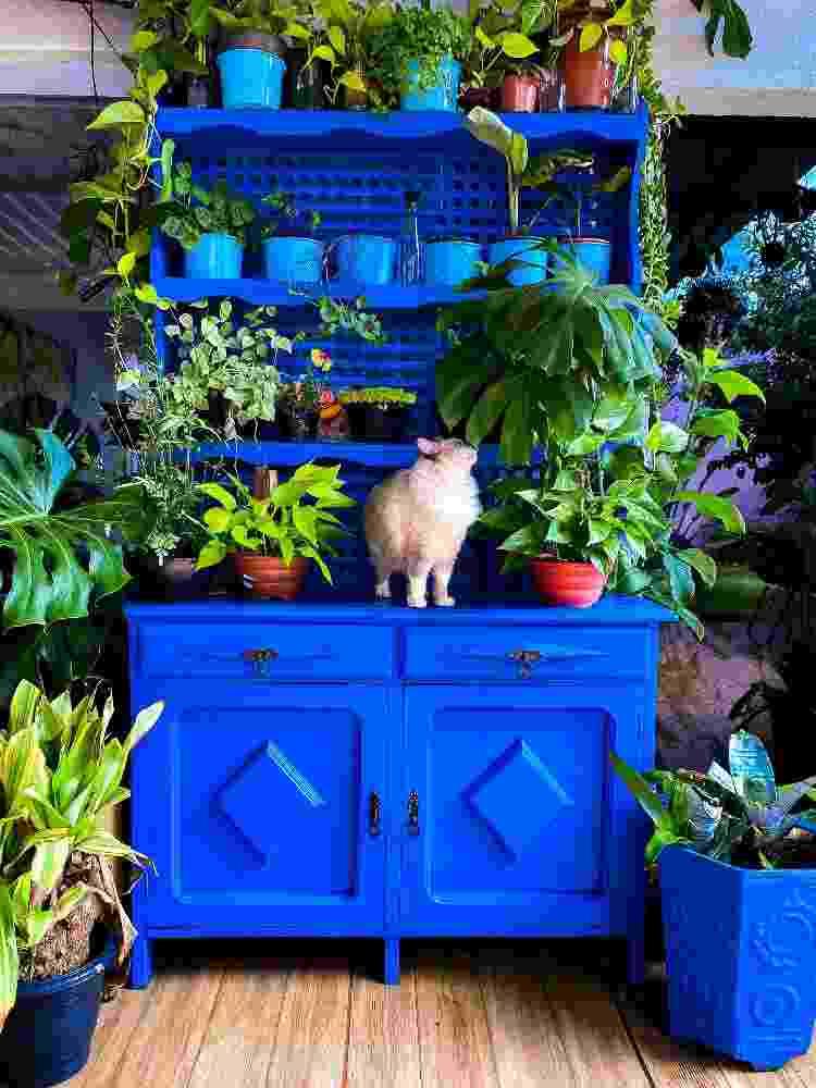 Pet da família em meio a decoração com plantas e cores - Arquivo Pessoal - Arquivo Pessoal