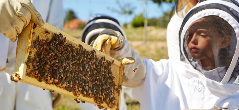 Atrações com abelhas no Carmel Valley Ranch, Califórnia - Reprodução