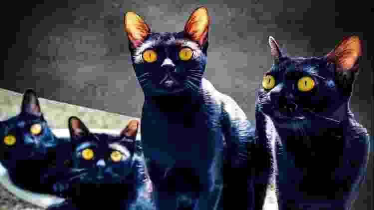 Gatos que deram vida a León foram importados dos Estados Unidos especialmente para a novela - Arquivo pessoal