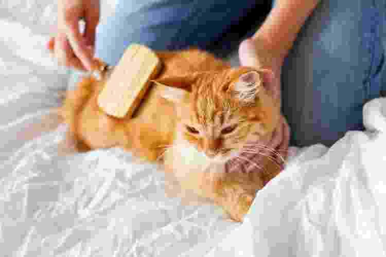 Escovar o gatinho pode ajudar a limpá-lo - Getty Images/iStockphoto - Getty Images/iStockphoto