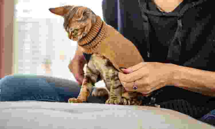 Se seu gato tolerar, roupinha é de grande ajuda no inverno - Getty Images - Getty Images