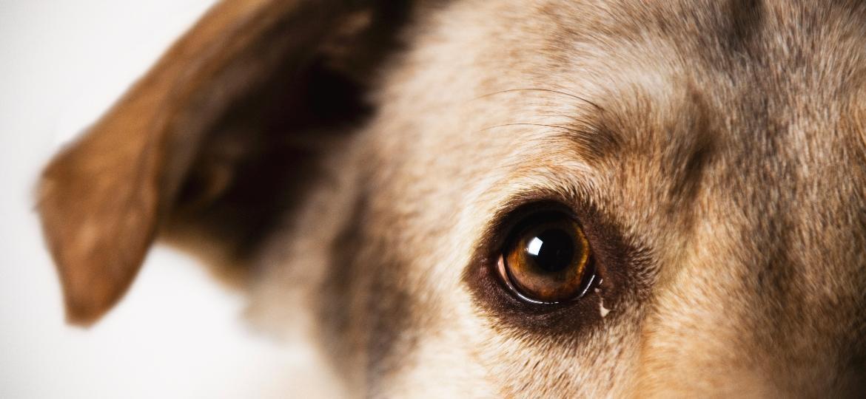 Será que seu cachorro enxerga em preto e branco? Não é bem assim - Getty Images