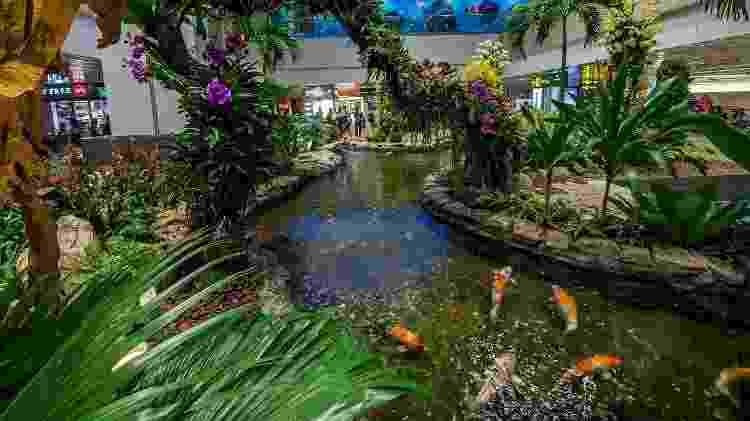 Um lago artificial de carpas distrai passageiros dentro do aeroporto de Changi - Divulgação/Changi Airport Group