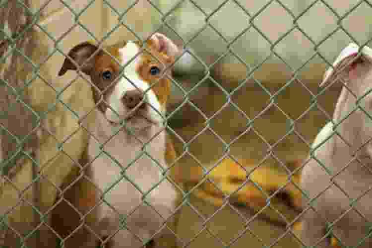 Negligência, abandono e violência são alguns dos atos considerados maus-tratos contra animais - Getty Images - Getty Images