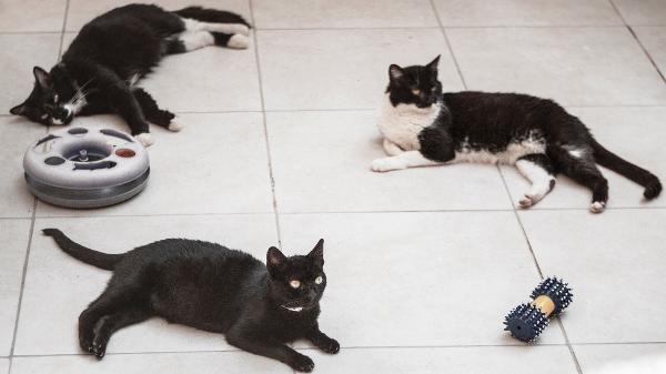 Sexta Feira 13 é Dia De Alerta Para Os Protetores De Animais