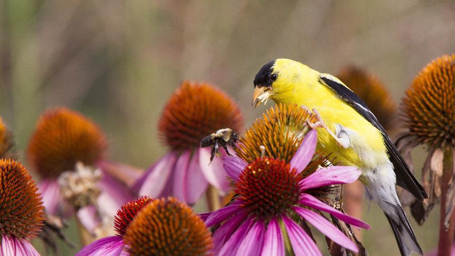 Pássaro e abelha disputam sementes - BoukeAtema/Getty Images/iStockphoto