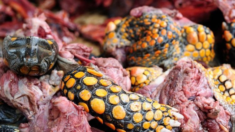 Carne de tartaruga: tradição culinária da região da Amazônia - rchphoto/Getty Images/iStockphoto - rchphoto/Getty Images/iStockphoto