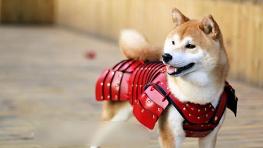 Preparado para uma batalha de carinhos com este soldado? - Reprodução/Facebook/Samurai Age