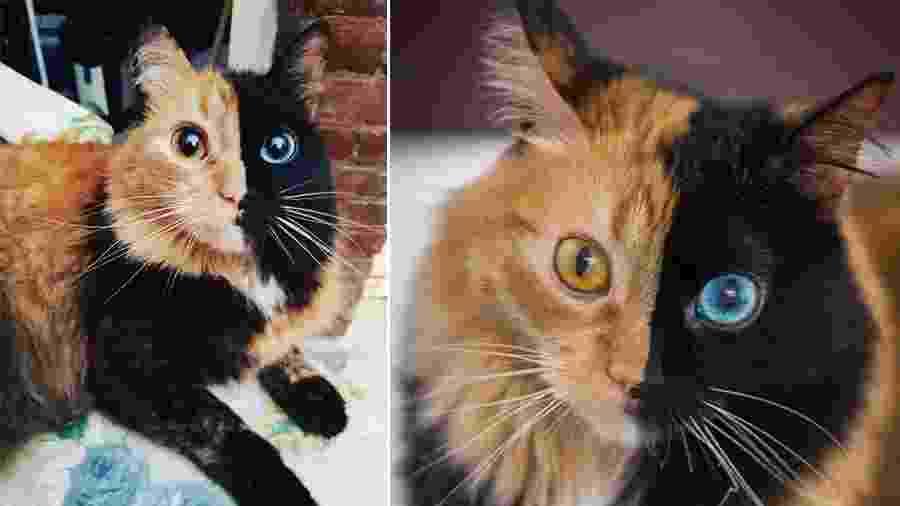 """Quimera, uma gatinha argentina que tem """"duas caras"""" - Reprodução/Instagram"""