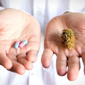 O trabalho reforça estudos anteriores de que o canabidiol tem potencial terapêutico promissor no tratamento da depressão