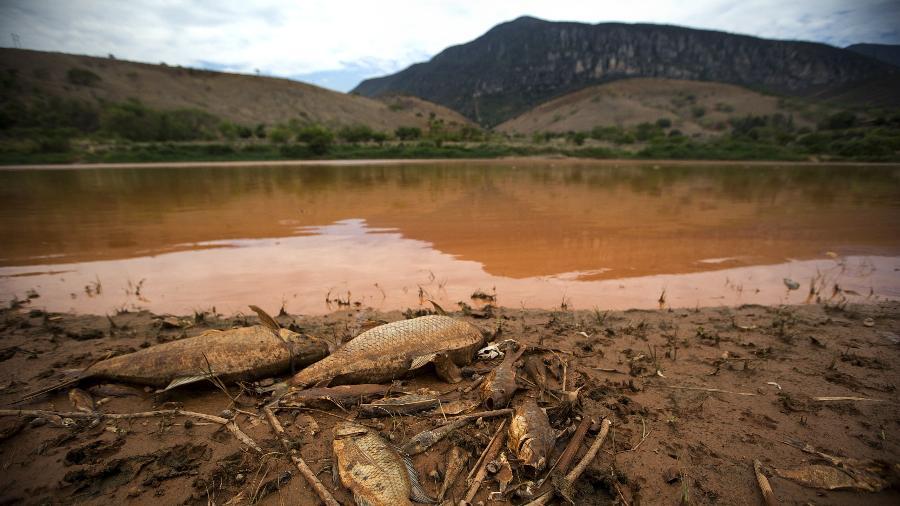 Rio de lama vindo do rompimeto da barragem em Mariana, atinge o municipio de Resplendor e mata peixes e animais do Rio Doce - Fabio Braga/Folhapress