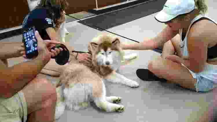 Rosie após o resgate - Reprodução/Facebook - Reprodução/Facebook