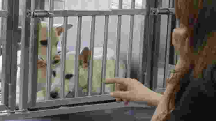 Taiwan vive problema de abandono de cães - BBC - BBC