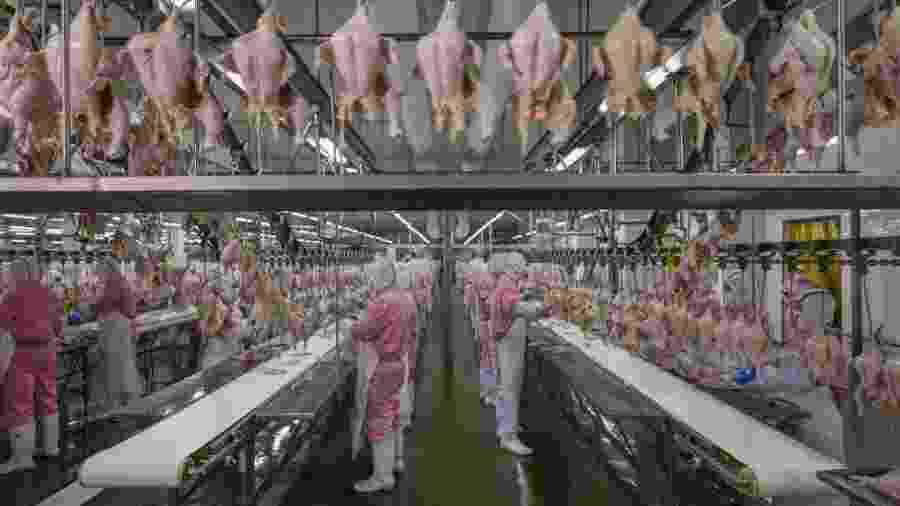 Frangos na China: a indústria da alimentação é tema do fotojornalista George Steinmetz - George Steinmetz / Cosmos