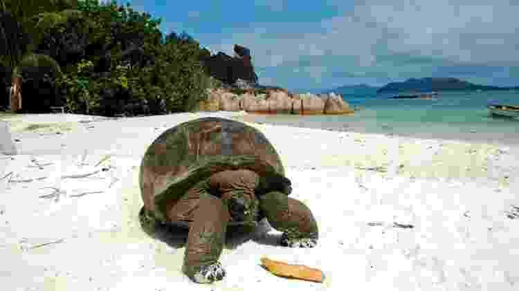 Tartaruga gigante em praia das Seychelles - Getty Images - Getty Images