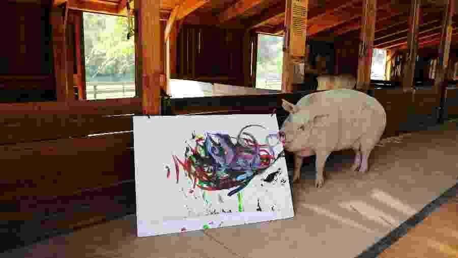 "A porca ""Pigcasso"", famosa por pintar quadros - Sumaya Hisham/Reuters"