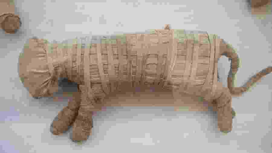 Os arqueólogos acreditam que dois dos animais mumificados podem ser filhotes de leão - Reprodução/Reuters