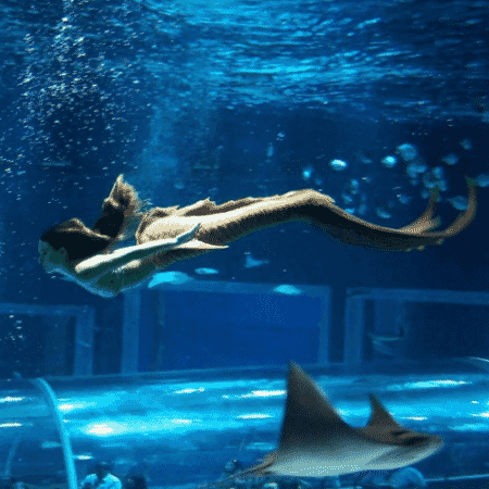 """Isis Valverde mostra clique de Ritinha trabalhando como sereia no aquário em """"A Força do Querer"""" - Reprodução/Instagram/isisvalverde"""