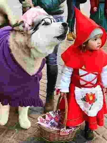 Pets capricham na fantasia de Carnaval - Reprodução/Instagram @geekdogpet