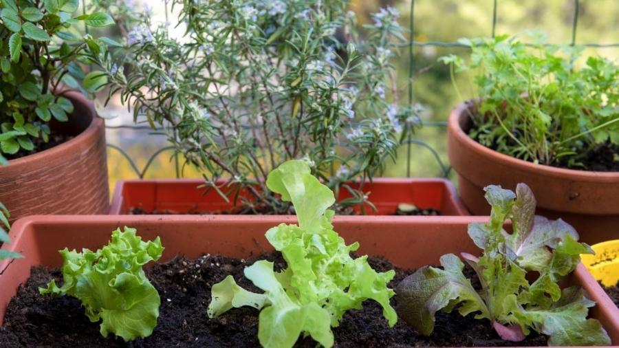 Você pode plantar seus próprios alimentos, temperos, frutas e ervas dentro do seu apartamento - iStock / Getty Images Plus