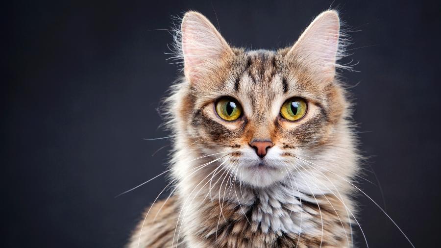 Saiba o significado de sonhar com gato em várias situações - Getty Images/iStockphoto