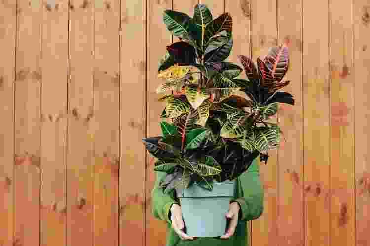 Prefira os vasos plásticos para plantar seu cróton; a planta também pode ir no jardim - Getty Images/iStockphoto - Getty Images/iStockphoto
