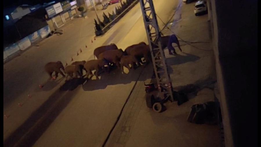 Grupo de elefantes que vivia em reserva atravessou 500 km em rodovias e campos de cultivo - Reprodução Reuters TV