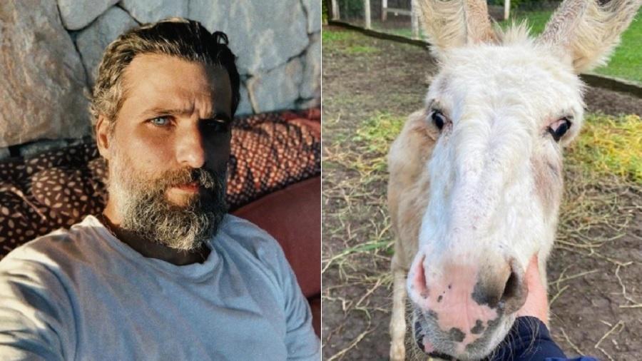 Bruno Gagliasso adota novo burro para seu rancho - Reprodução/Instagram