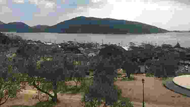 Plantação de oliveiras em Shodoshima - Mirela Mazzola - Mirela Mazzola