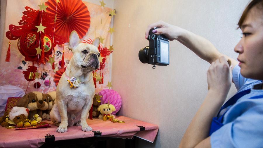 O buldogue francês Bao ganha dia de tratamento em spa de Hong Kong - AFP