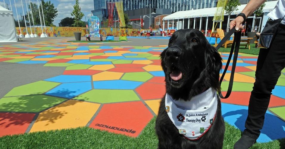 Demi, outro cão terapeuta que ajuda atletas no Pan de Toronto