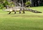 Já vai? Crocodilo passeia em campo de golfe e assusta jogadores; veja - Reprodução/Youtube