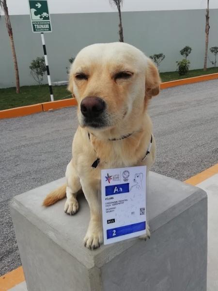 El Chato de Punta Rocas, cachorro que vive no local onde se disputa o surfe no Pan - Arquivo Pessoal