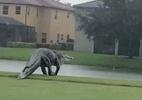 Jacaré gigante caminha em campo de golfe durante ciclone nos EUA; assista - Reprodução
