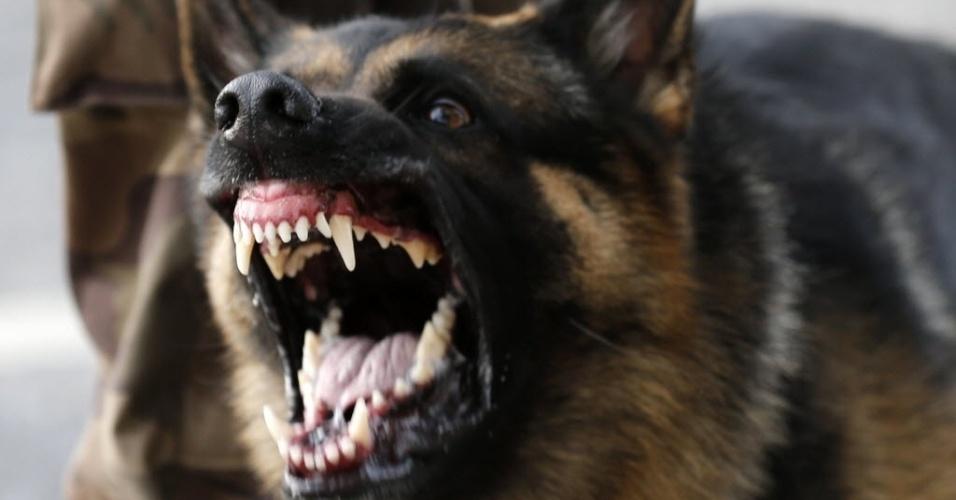 22.06.13 - Cachorro mostra os dentes para manifestantes durante protesto em Belo Horizonte; conflito com Força Nacional teve feridos dos dois lados