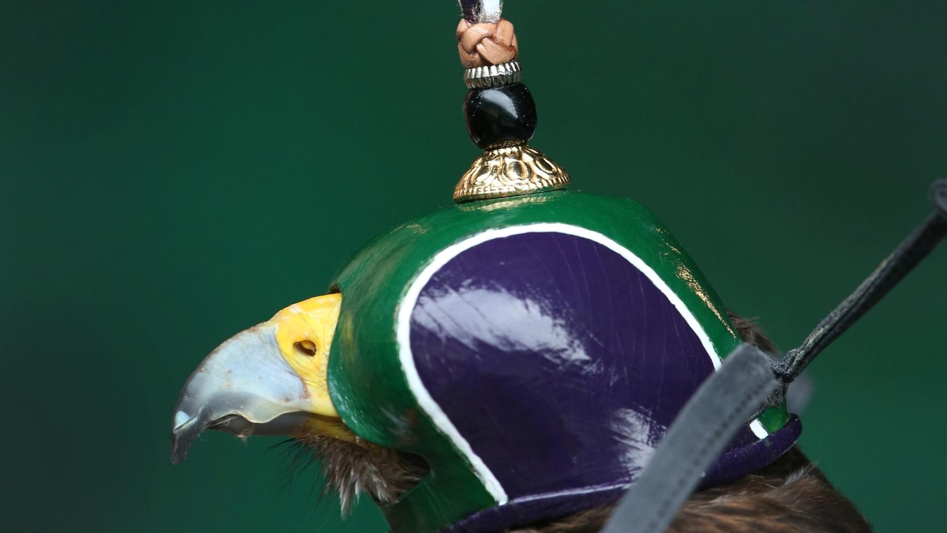 02.jul.2013 - Rufus, falcão responsável por livrar quadras de Wimbledon dos pombos, tem a cabeça coberta