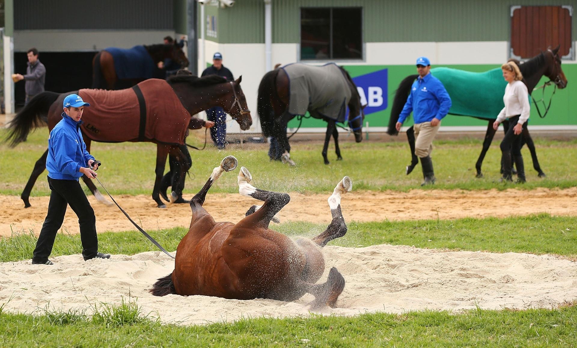 Cavalo espoja na areia após treinamento durante evento do Victoria Derby, tradicional corrida australiana de cavalos