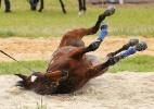 Corrida na Austrália tem cavalos rolando na areia e chapéu seletor - Michael Dodge/Getty Images