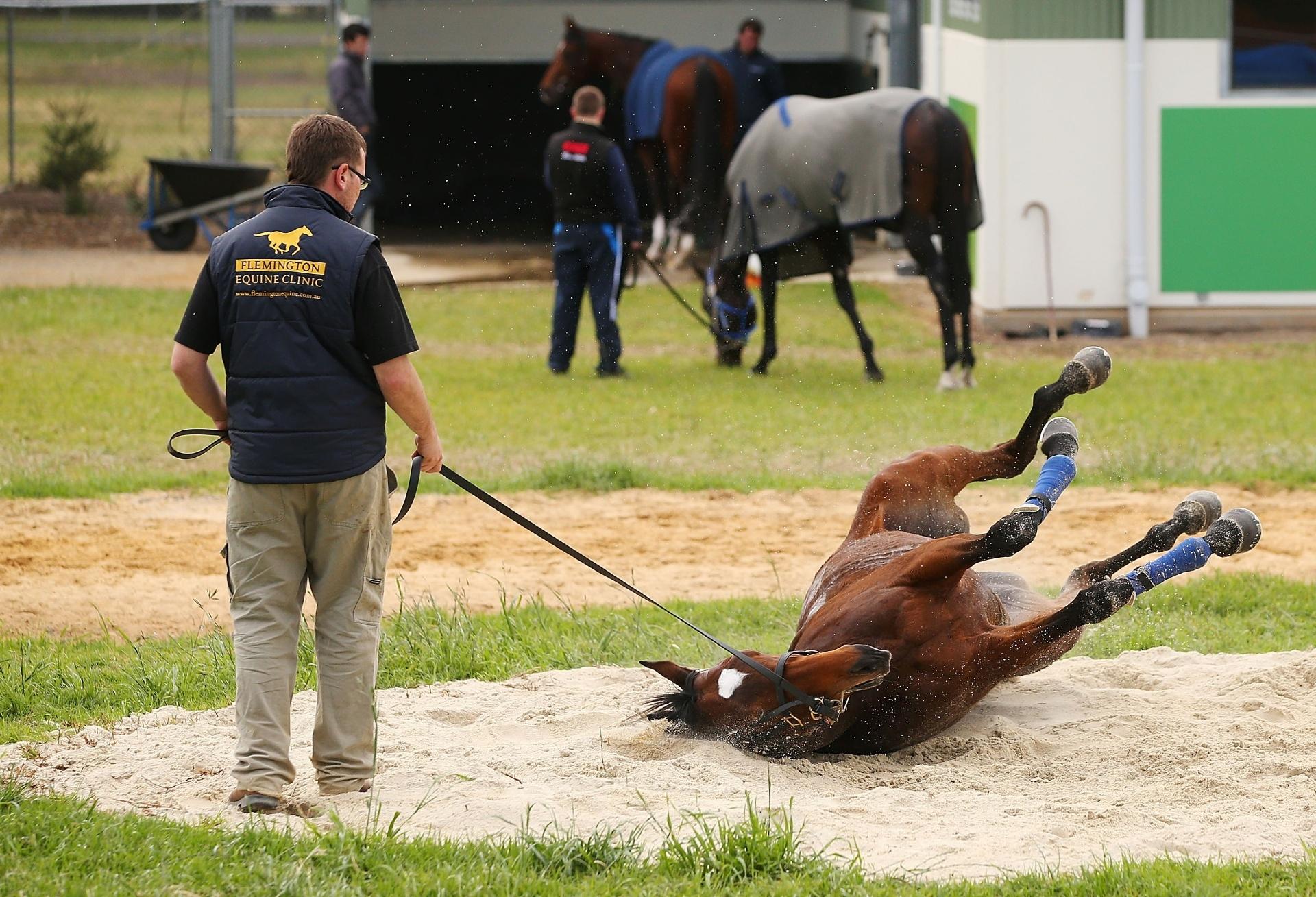 Cavalo rola na areia após treinamento na Austrália durante evento do Victoria Derby, tradicional corrida australiana de cavalos