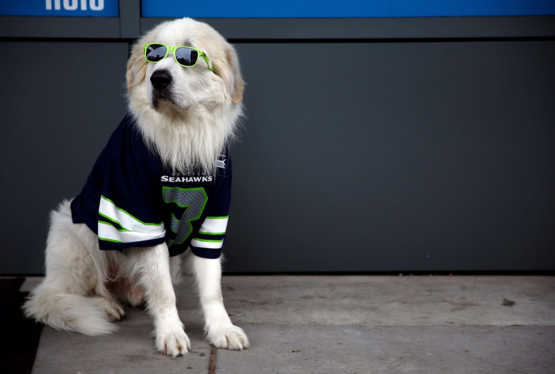 19.jan.2014 - Até cachorro é visto no estádio vestido a caráter para 'torcer' pelo Seattle Seahawks na final da conferência nacional da NFL