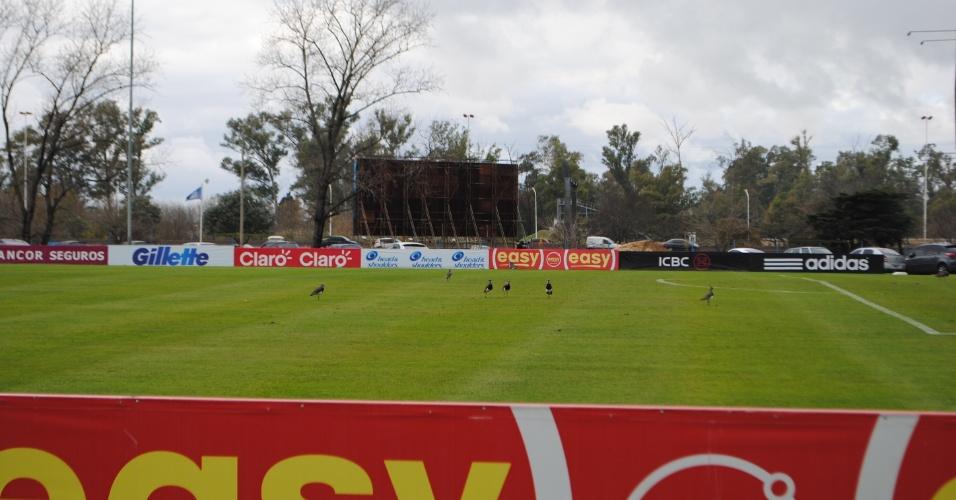 Depois que os argentinos deixaram os gramados em Ezeiza, um time de quero-quero entrou para treinar