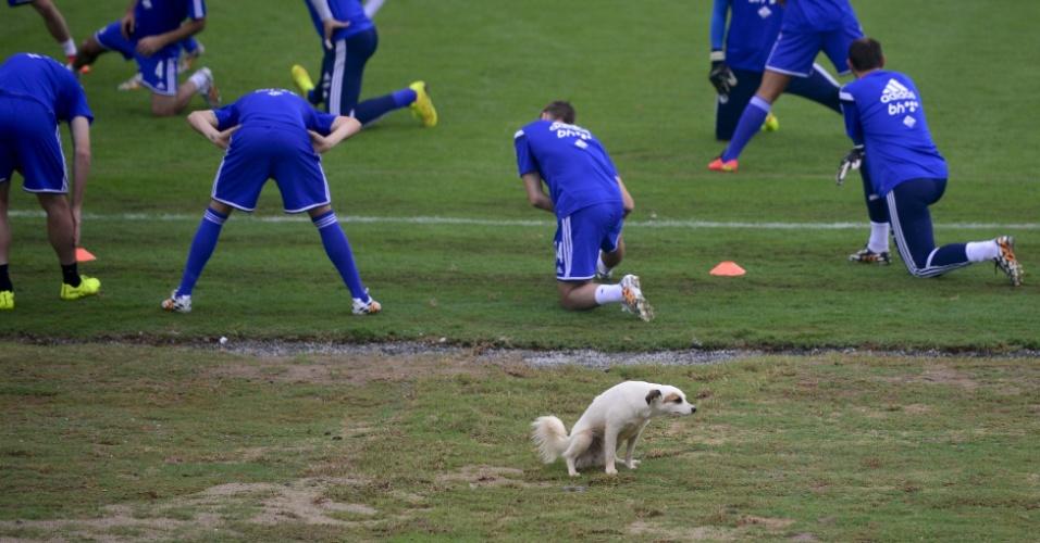 Jogadores da Bósnia-Herzegovina fazem aquecimento no estádio Municipal Antonio Fernandes, no Guarujá, que conta com a presença de cachorra