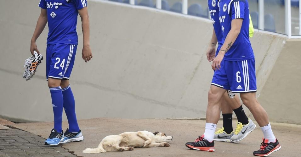 Jogadores, da Bósnia-Herzegovina, passam por cachorra presente no estádio Municipal Antonio Fernandes, no Guarujá