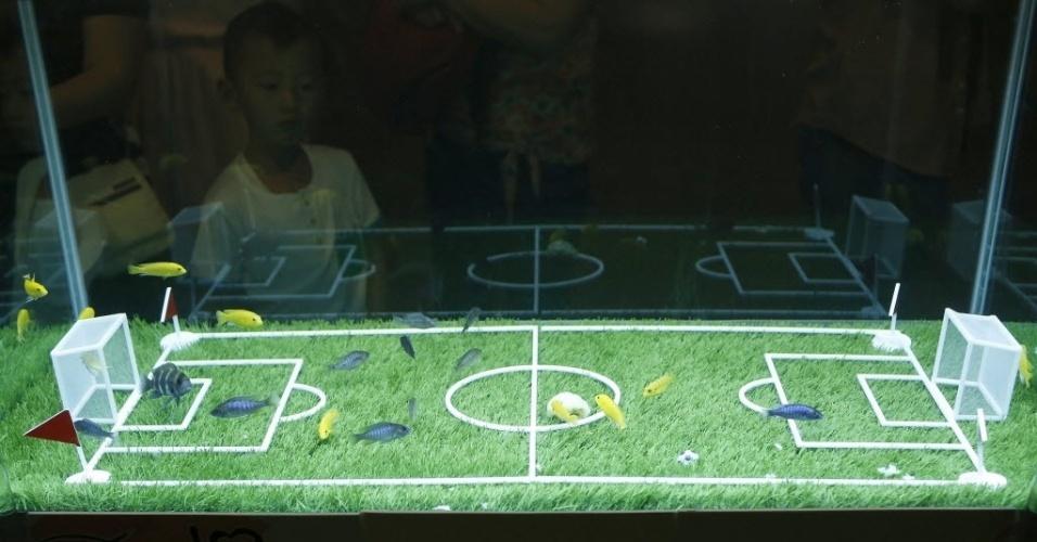 12.jun.2014 - No clima da Copa, evento em Shangai cria o 'Fish Soccer Match' (jogo de futebol de peixes) e deixa as crianças entusiasmadas com os peixinhos azuis e amarelos
