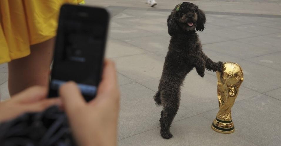 12.jun.2014 - Na China, um cachorrinho posa para foto com uma bandeirinha do Brasil e com a taça da Copa do Mundo