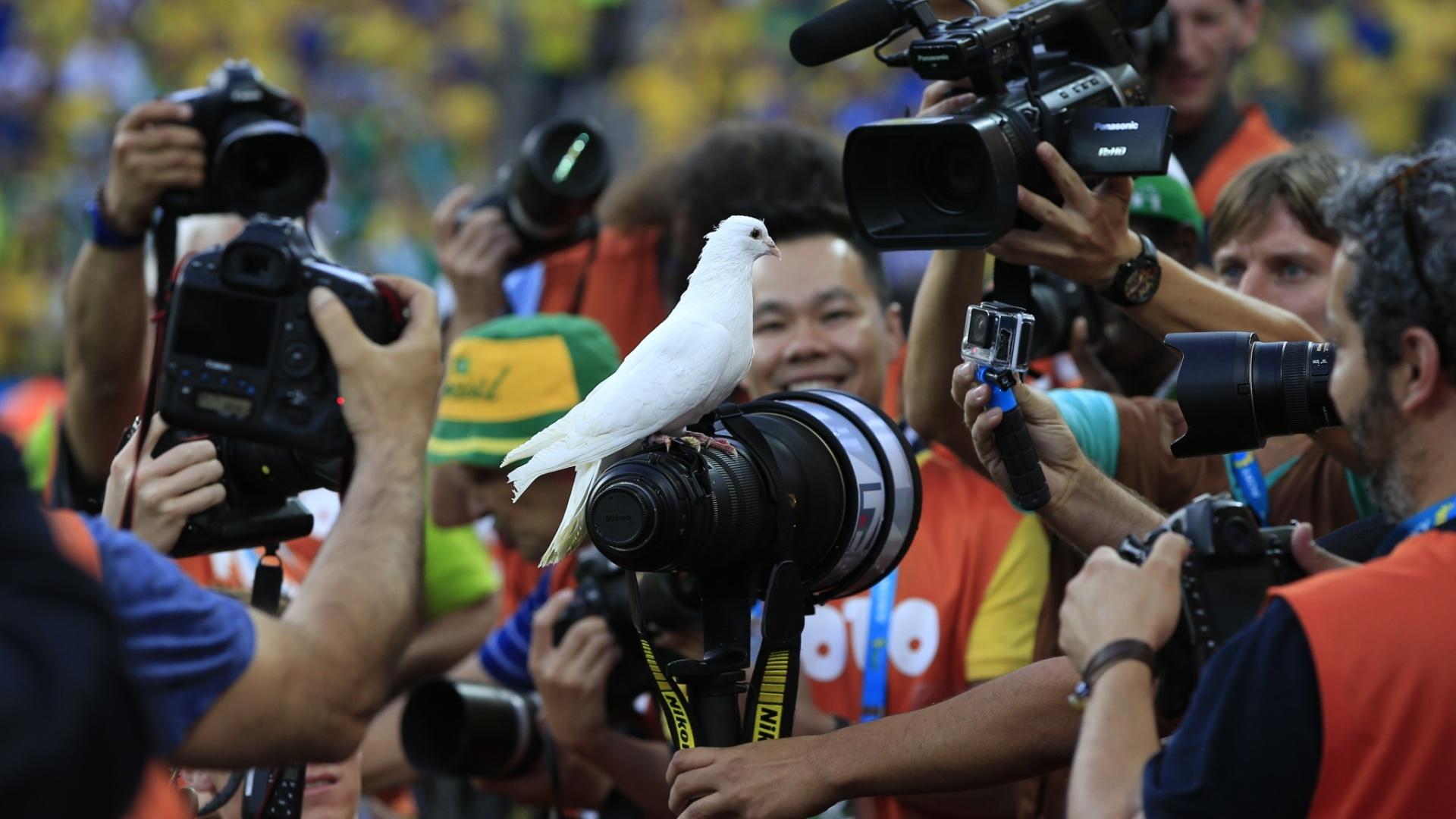 12.jun.2014 - Pomba que foi solta antes do início da partida entre Brasil e Croácia faz a alegria de fotógrafos no Itaquerão