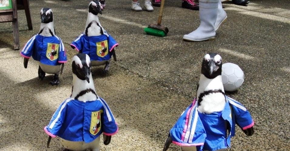 13.jun.2014 - Pinguins vestem a camisa da seleção japonesa e formam uma seleção bastante inusitada no país asiático; brincadeira foi feita na cidade de Shimane
