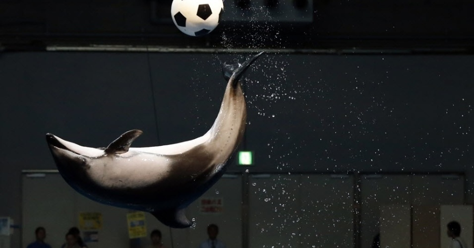 Em Tóquio, capital do Japão, um golfinho dá show de acrobacias com uma bola no Aquário Shinagawa por causa da Copa