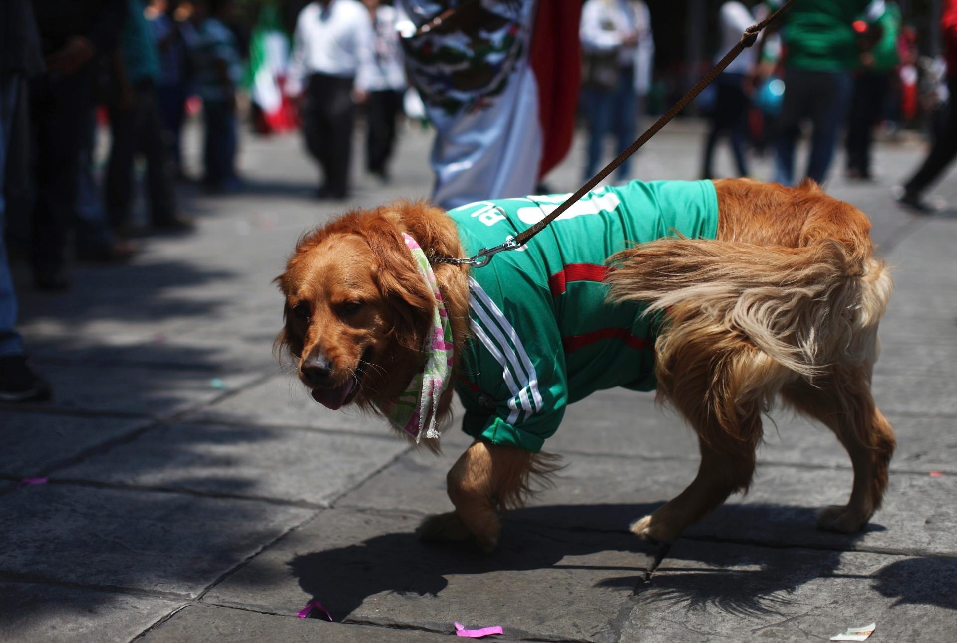 Cachorrinho veste a camisa da seleção mexicana na capital do país