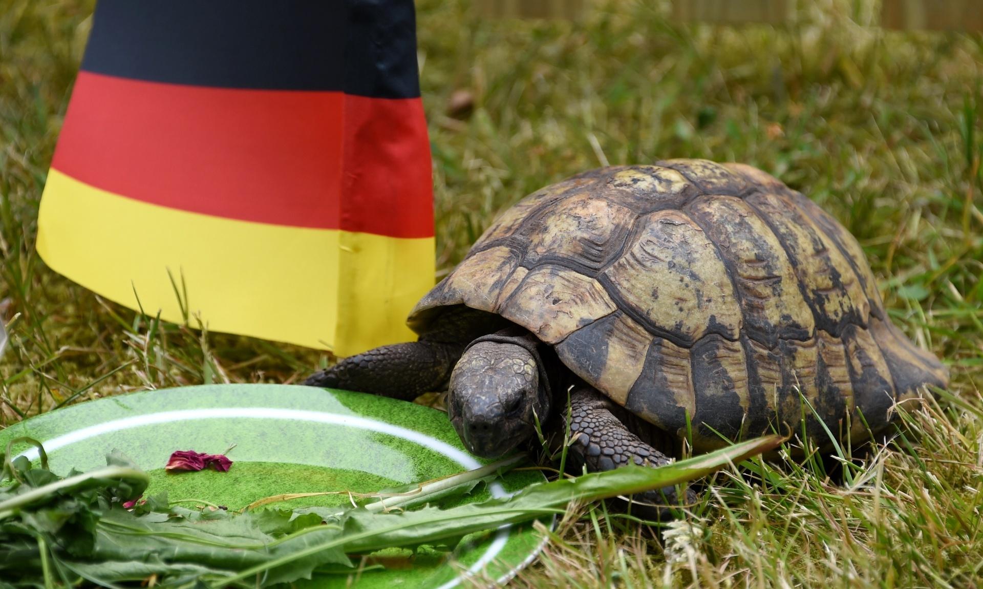 16.jun.2014 - Pequena tartaruga foi apelidada de